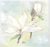 こぶしの花�V.jpg